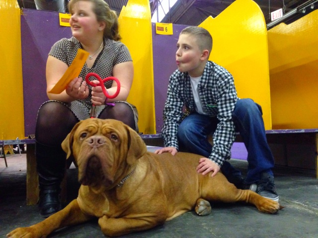 The 138th Westminster Dog Show